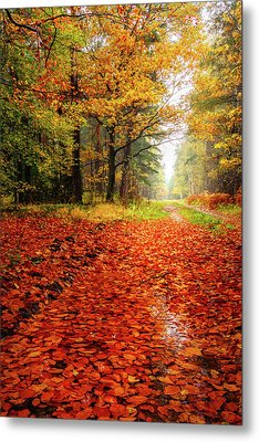 Metal Print featuring the photograph Orange Carpet by Dmytro Korol