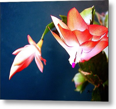 Orange Christmas Cactus II Metal Print