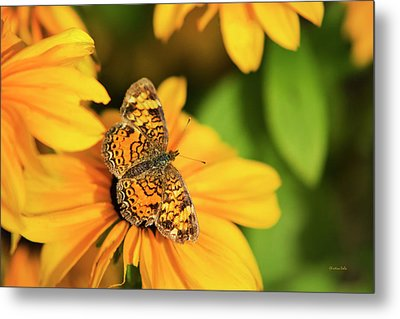 Orange Crescent Butterfly Metal Print by Christina Rollo