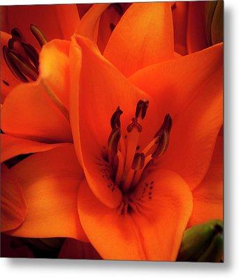 Orange Lily Metal Print by David Patterson