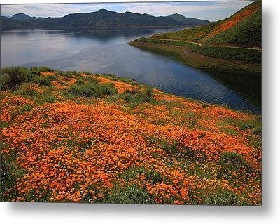 Orange Poppy Fields At Diamond Lake In California Metal Print by Jetson Nguyen