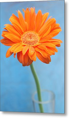 Orange Slanted Gerbera Metal Print by Photography by Gordana Adamovic Mladenovic