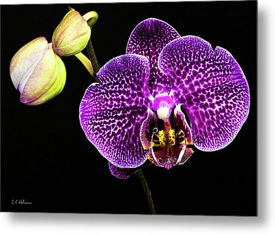 Orchid Metal Print by Christopher Holmes