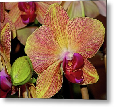 Orchid Metal Print by Lynda Lehmann