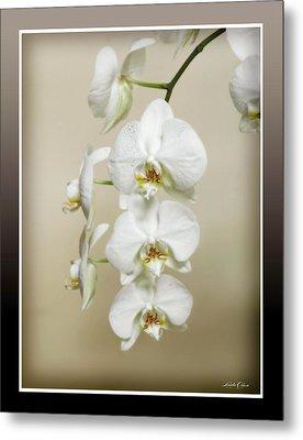 Orchid Spray Metal Print by Linda Olsen