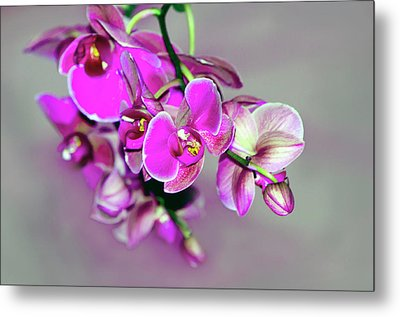 Orchids On Gray Metal Print by Ann Bridges