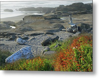 Oregon Coast Yachats 4 Metal Print