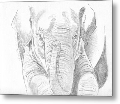 Original Pencil Sketch Elephant Metal Print by Shannon Ivins