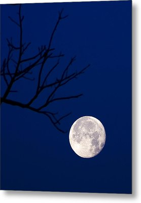 Metal Print featuring the photograph Ornament by Alan Raasch