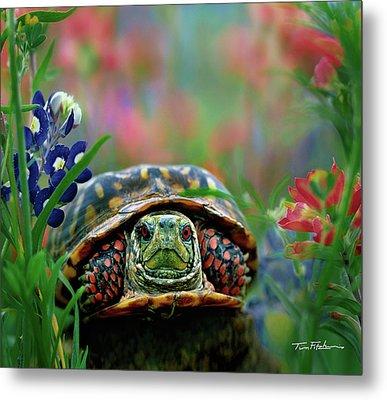 Ornate Box Turtle Metal Print