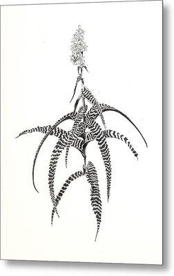 Orthophytum Gurkenii Metal Print