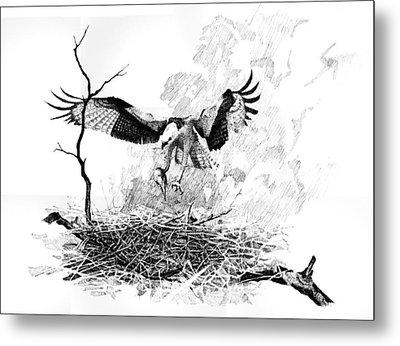 Osprey Metal Print by Paul Illian