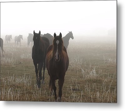 Out Of The Mist Metal Print by DeeLon Merritt