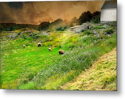 Out To Pasture Metal Print by Diana Angstadt