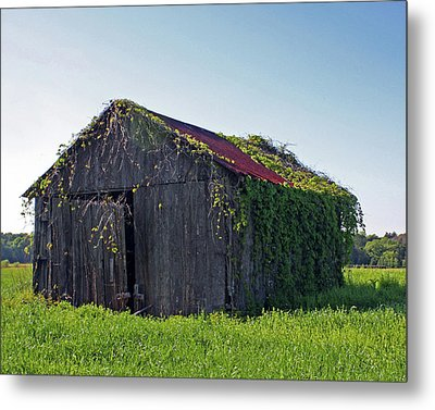 Out To Pasture Metal Print by Joy Tudor