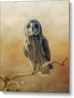 Metal Print featuring the photograph Owl  by Angie Vogel