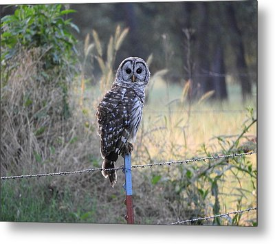 Owl Cherish This Moment Forever Metal Print by Roxanne Raber