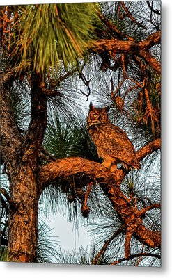 Owl In The Very Last Sunset Light Metal Print