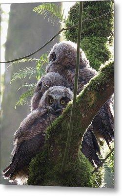 Owl Morning Metal Print