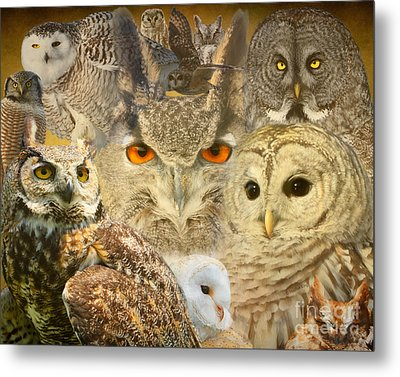 Owl You Need Is Love Metal Print by Heather King