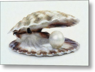 Oyster With Pearl Metal Print