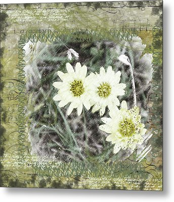 Package Of Three Metal Print by Nadine Berg
