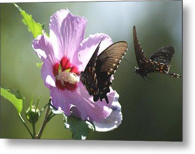 Pair Of Butterflies Metal Print by Rick Friedle