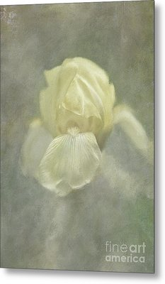 Metal Print featuring the digital art Pale Misty Iris by Lois Bryan