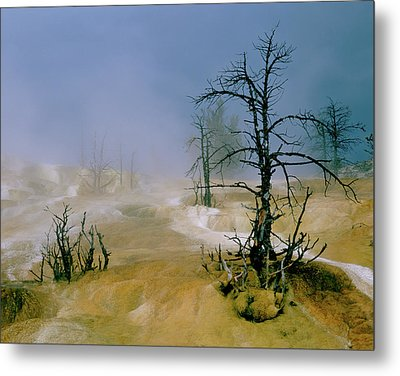 Palette Spring Metal Print by Ed  Riche