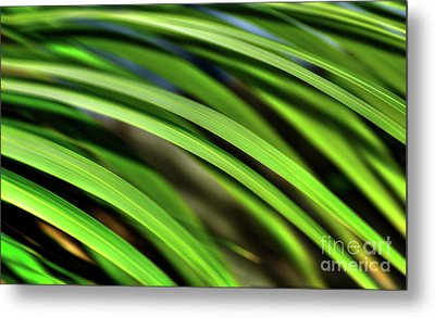 Metal Print featuring the photograph Palm Abstract By Kaye Menner by Kaye Menner