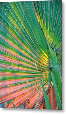 Palm Colors Metal Print