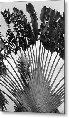 Palm Frons Metal Print by Rob Hans