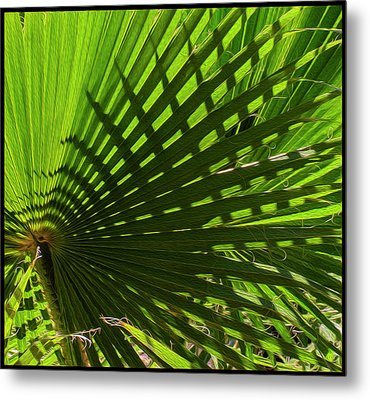 Metal Print featuring the photograph Palm Pattern No.1 by Mark Myhaver