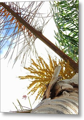 Palm Sky View Metal Print