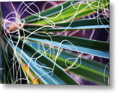 Palm Strings Metal Print by John Glass