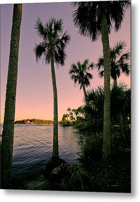 Palm Trees And Pink Skies Metal Print by Laura DAddona