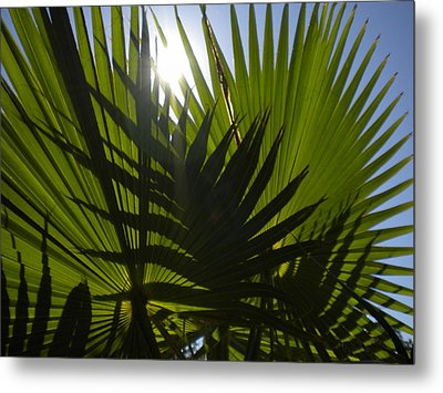 Metal Print featuring the photograph Palmetto 3 by Renate Nadi Wesley