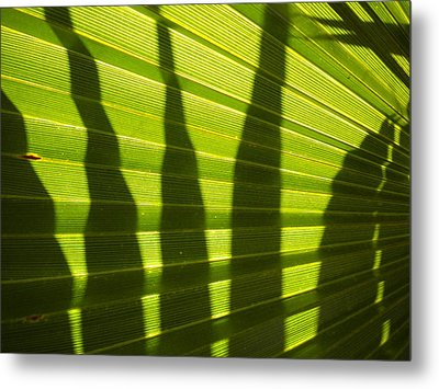 Metal Print featuring the photograph Palmetto 4 by Renate Nadi Wesley