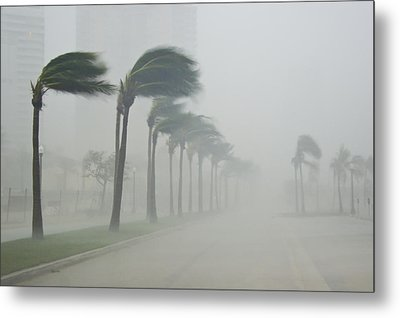 Palms Blow In 100 Mile-per-hour Winds Metal Print by Mike Theiss