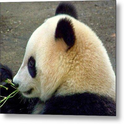 Panda Snack Metal Print by Karen Wiles