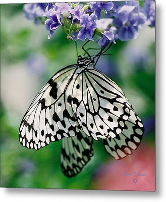 Metal Print featuring the photograph Paper Rice Butterfly by Donna Brown
