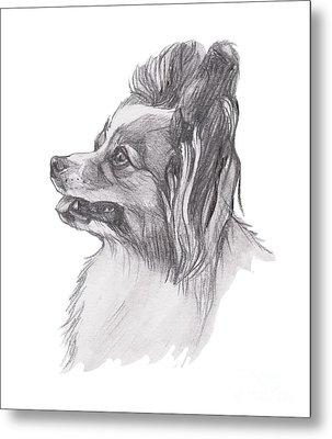 Papillon Dog Charcoal Drawing Metal Print