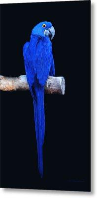 Parrot Perfection Metal Print