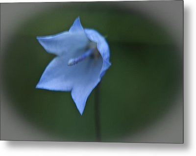 Metal Print featuring the photograph Parrys Bell Flower by Daniel Hebard
