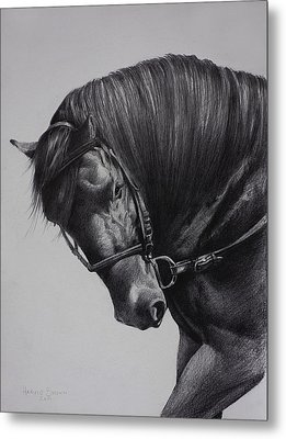 Paso Fino Metal Print by Harvie Brown