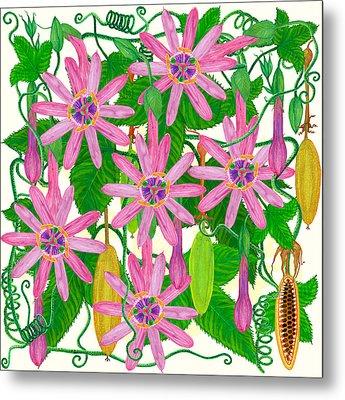 Passiflora Mollissima Metal Print