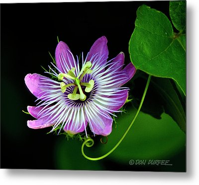 Passion Metal Print by Don Durfee