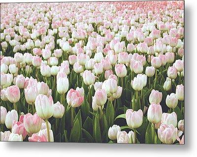 Pastel Pink Tulips- Art By Linda Woods Metal Print by Linda Woods