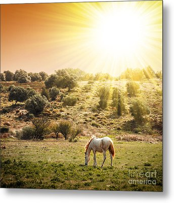 Pasturing Horse Metal Print by Carlos Caetano