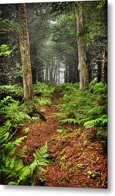 Path In The Ferns Metal Print